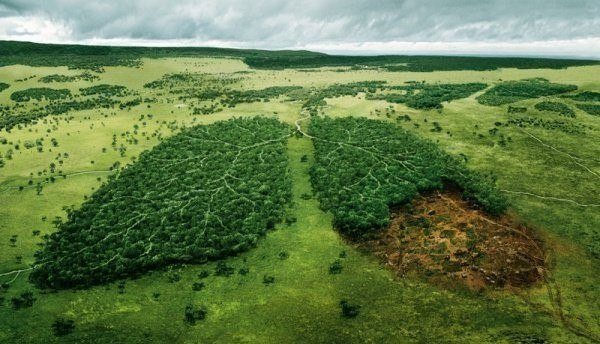 Леса — легкие планеты