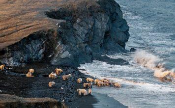 ostrov-vrangelya