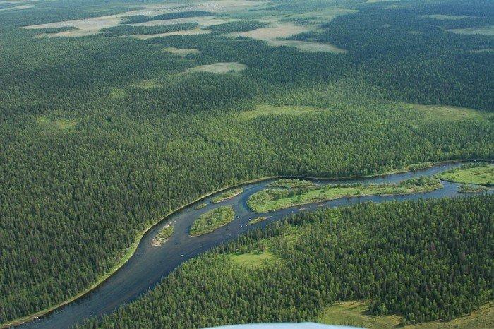 девственные леса Республики Коми
