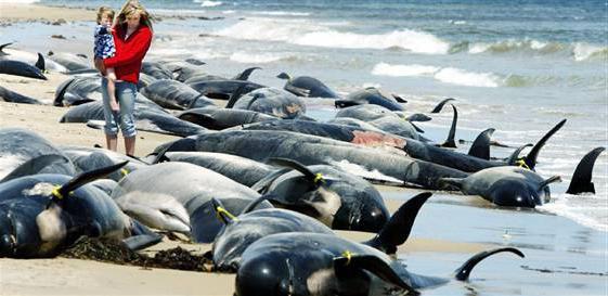 kity-vybrosilis-na-bereg